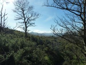 Climbing Bray Head