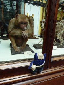 Explorer Beastie with Capuchin Monkey