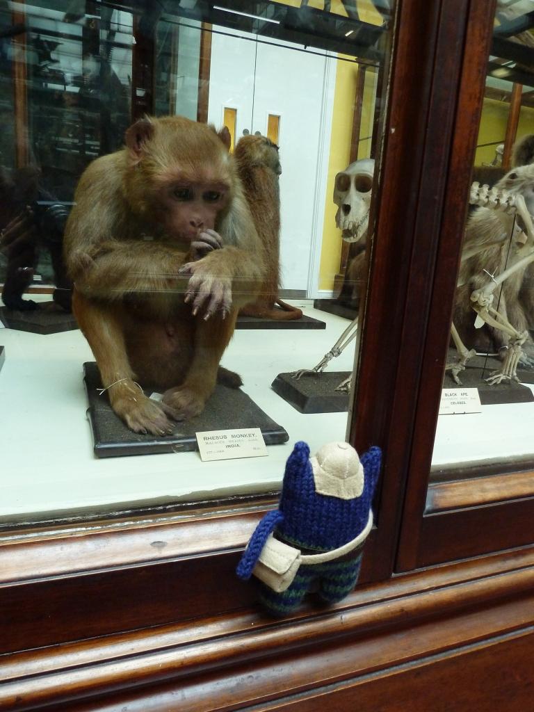 Explorer Beastie with Capuchin Monkey - CrawCrafts Beasties