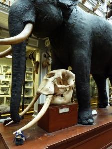 Victorian Explorer Beastie with Elephant