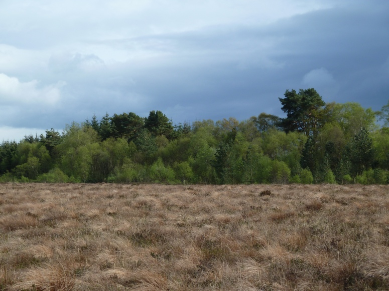 Forest, Roscommon