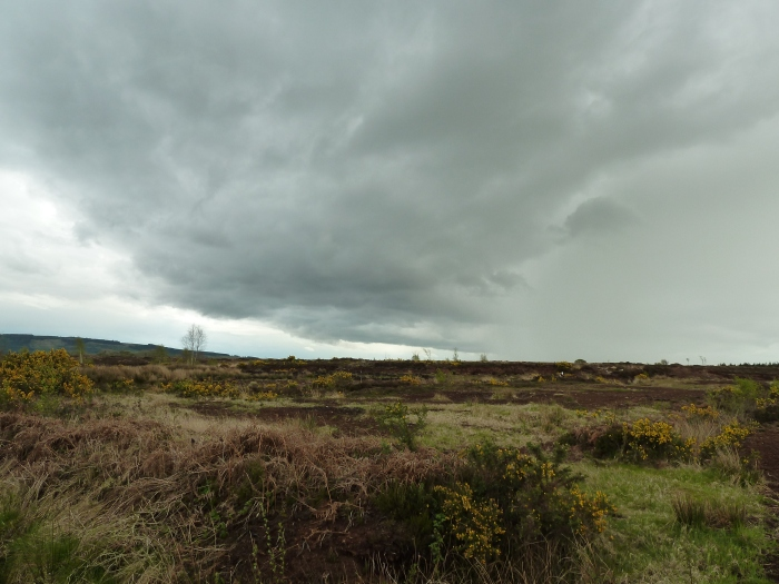 Peat Bog on a Cloudy Day