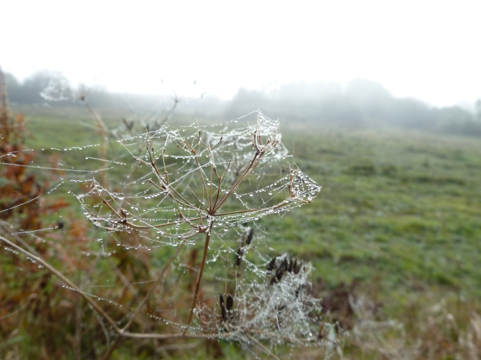 Spiderwebs in the Mist