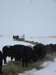 Cattle Feeding - CrawCrafts Beasties/N Couture