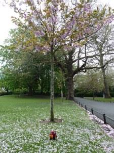 Cherry Blossom at St Stephen's Green - CrawCrafts Beasties