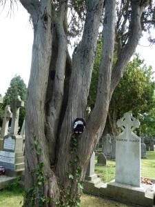 Goth Beastie in the Trees (1) - CrawCrafts Beasties