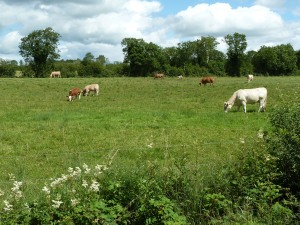 Cows in Roscommon - CrawCrafts Beasties