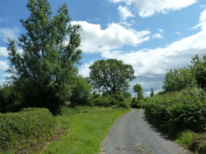 The Colours of Summer in Ireland - CrawCrafts Beasties