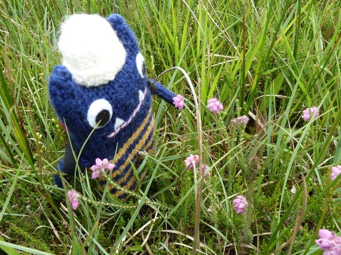 Explorer Beastie Makes a Botanical Discovery - CrawCrafts Beasties