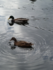 Ducks at the Canal, by CrawCrafts Beasties