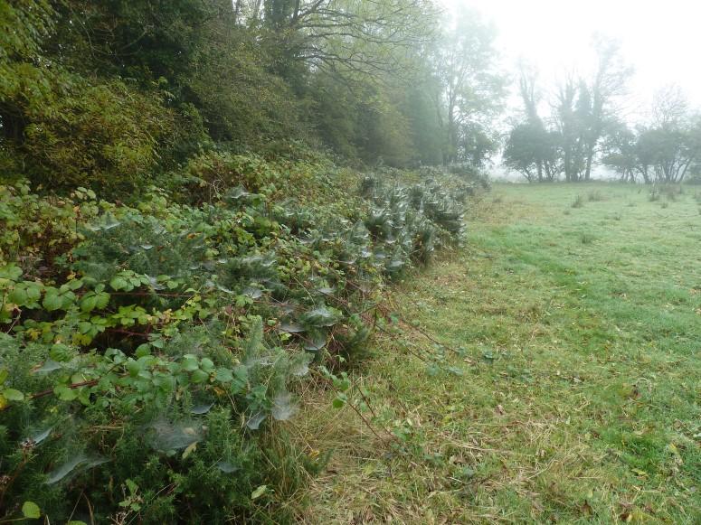 Misty Mornings in Roscommon - CrawCrafts Beasties