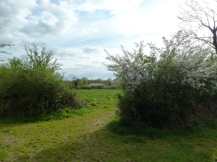 Roscommon Fields in Spring - CrawCrafts Beasties