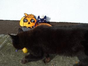 Gizmo the Gatecrasher - CrawCrafts Beasties