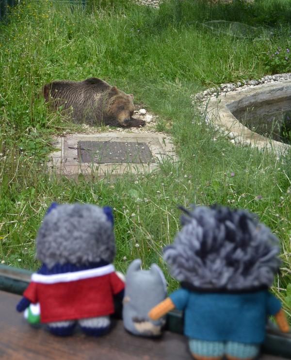A Poorly Bear at the Park Zoo, Pescasseroli - A de Girolamo/CrawCrafts Beasties