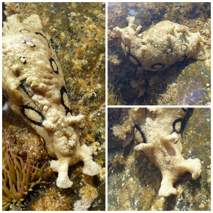 Sea Slug - H Crawford/CrawCrafts Beasties