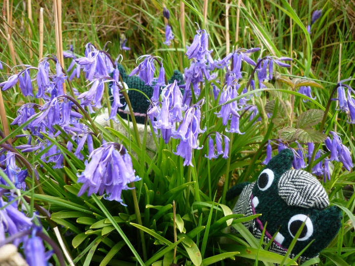 Paddy and Plunkett, Plus Some Bluebells! CrawCrafts Beasties