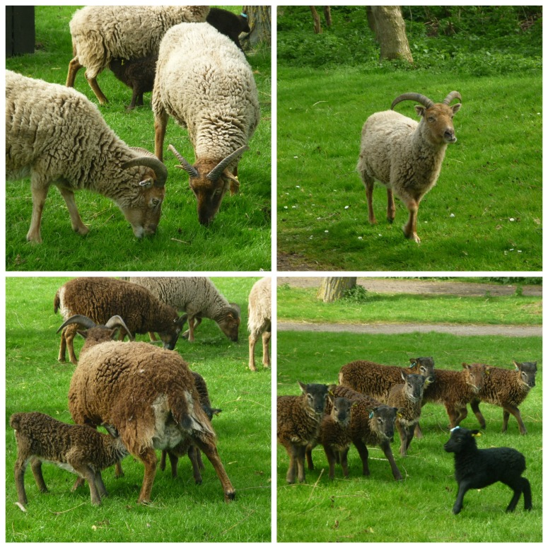 Soay Sheep! H Crawford/CrawCrafts Beasties
