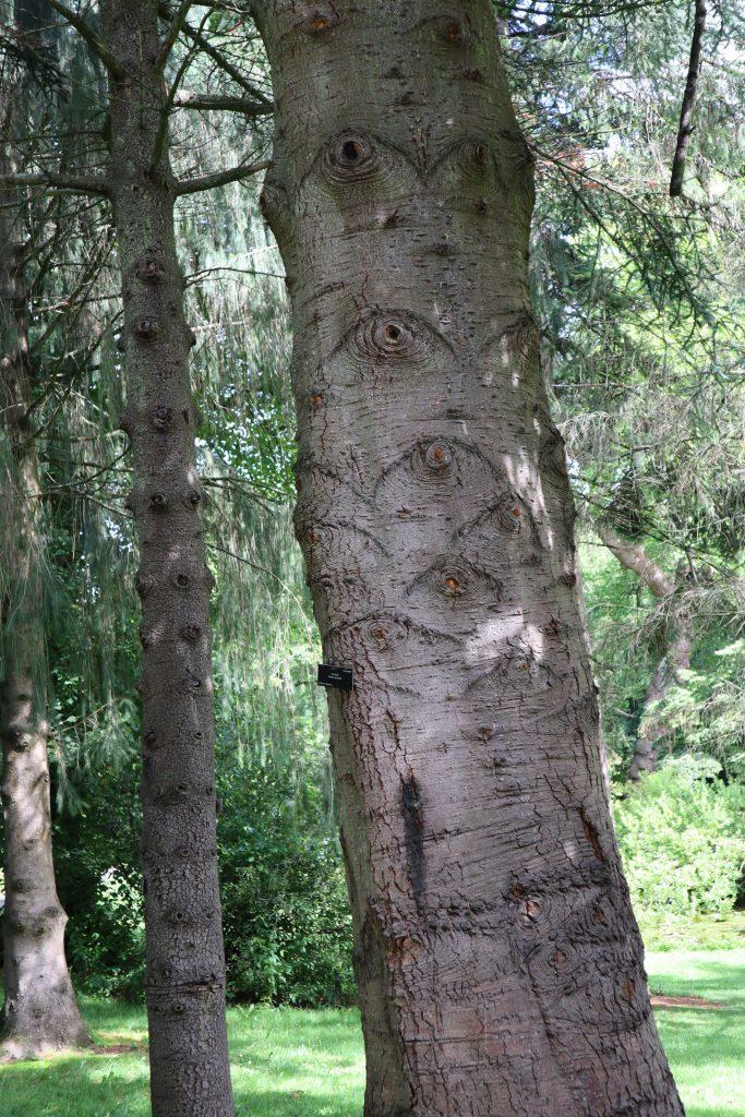 Spooky Tree - Botanic Gardens Dublin - CrawCrafts Beasties