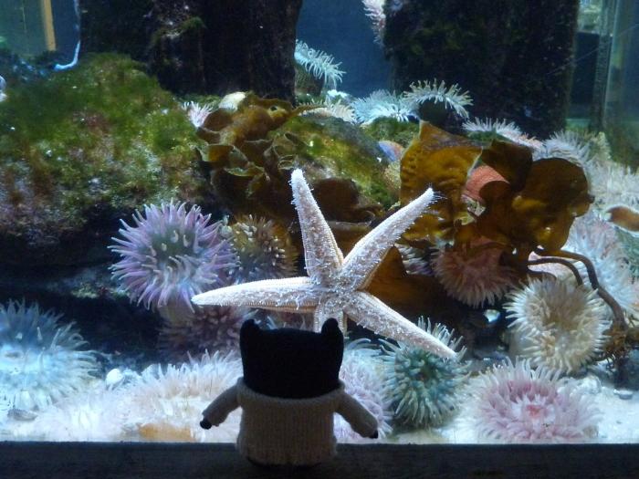 Strolling Starfish - Sea Zoo Anglesey - H Crawford/CrawCrafts Beasties