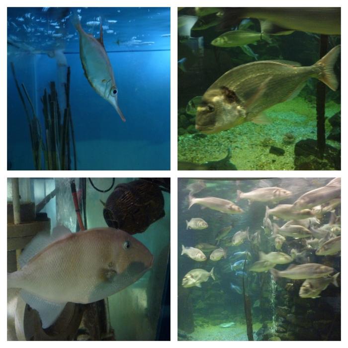 Fish! Anglesey Sea Zoo - H Crawford/CrawCrafts Beasties