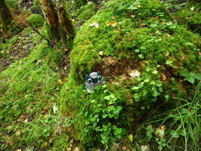 Plunkett finds some moss - Staycation in Sligo - H Crawford/CrawCrafts Beasties