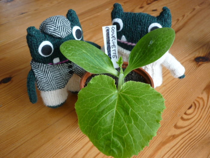 Paddy, Plunkett and the Growing courgette plant - H Crawford/CrawCrafts Beasties