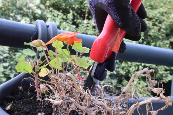 Pruning Duty - Balcony Garden - CrawCrafts Beasties