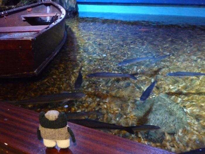 Plunkett Ponders the Fish - Sea Zoo - H Crawford/CrawCrafts Beasties