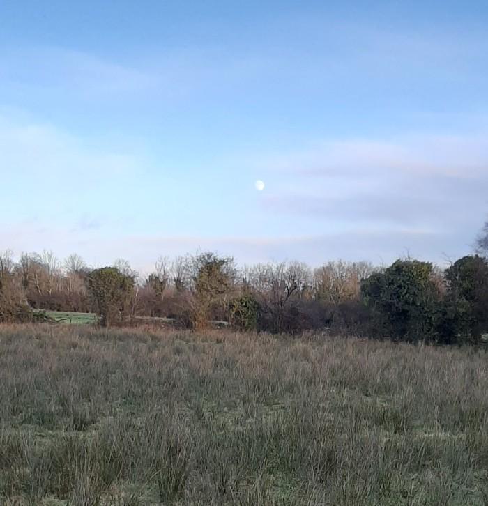 The Moon & the Fields - CrawCrafts Beasties