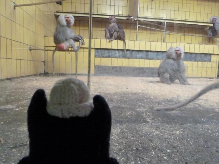 Baboons at Frankfurt Zoo - CrawCrafts Beasties