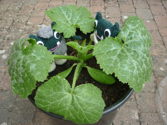 Any courgettes growing yet? H Crawford/CrawCrafts Beasties