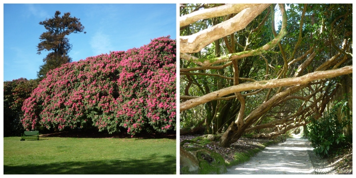Giant Rhododendrons at Heligan - H Crawford/CrawCrafts Beasties