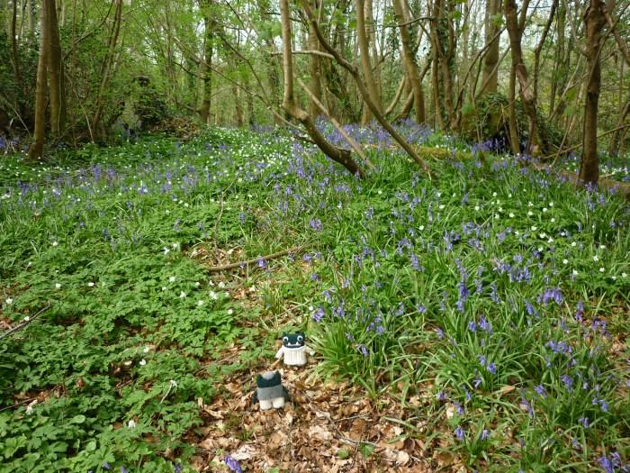 Bluebells in Galgorm Wood - Paddy and Plunkett - CrawCrafts Beasties