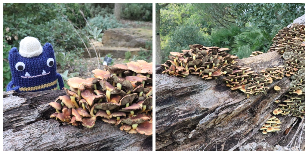 Autumnal Fungus Fun - CrawCrafts Beasties