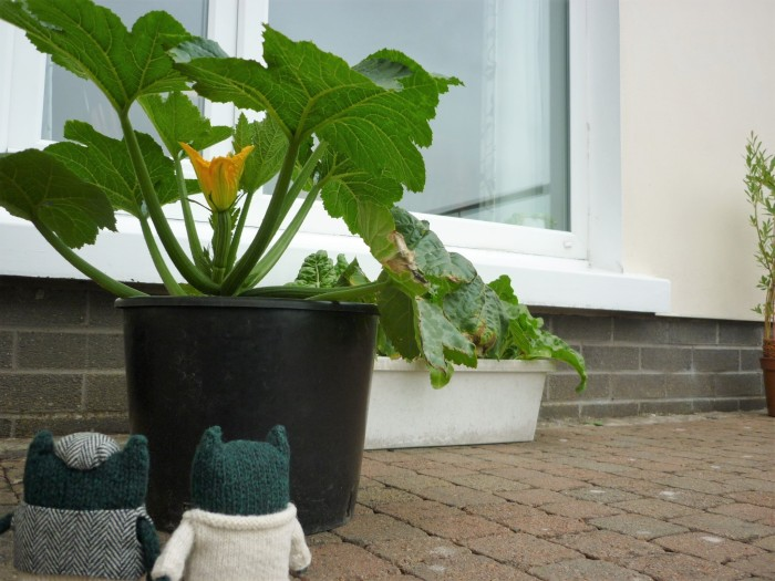 Paddy, Plunkett and the Courgette Plant - H Crawford/CrawCrafts Beasties