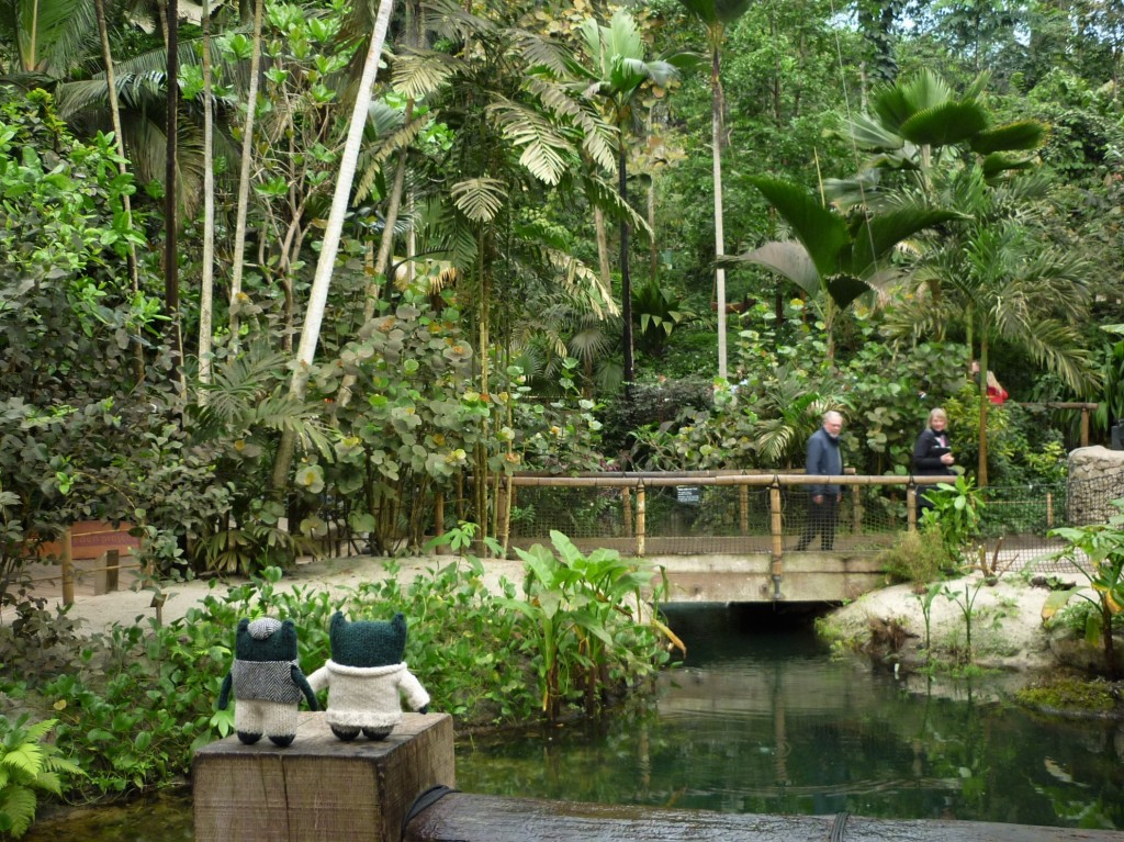 Inside the Rainforest Biome at the Eden Project - H Crawford/CrawCrafts Beasties