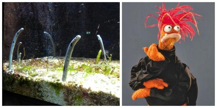 Sand Eels and Pepe the Prawn - CrawCrafts Beasties