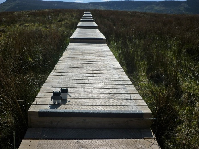 Taking in the Bog at Cuilcagh Moutain - H Crawford/CrawCrafts Beasties
