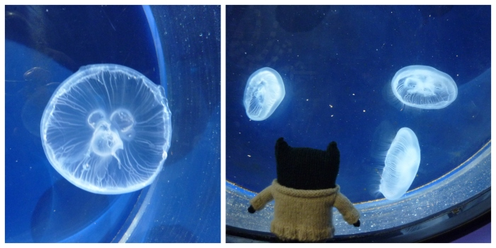 Paddy and the Moon Jellies - Anglesey Sea Zoo - H Crawford/CrawCrafts Beasties