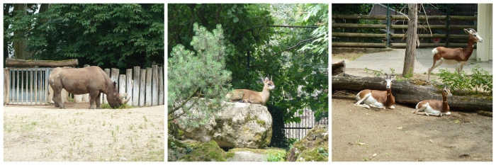 African Wildlife at Frankfurt Zoo - CrawCrafts Beasties