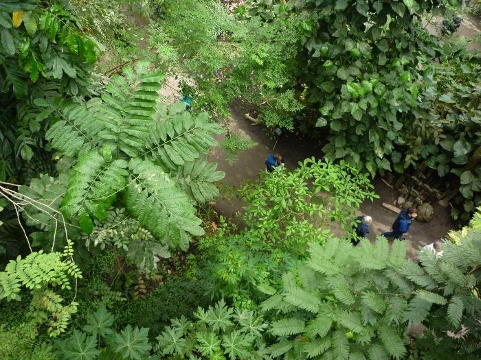 Beasties or People? Rainforest Biome, Eden Project - H Crawford/CrawCrafts Beasties