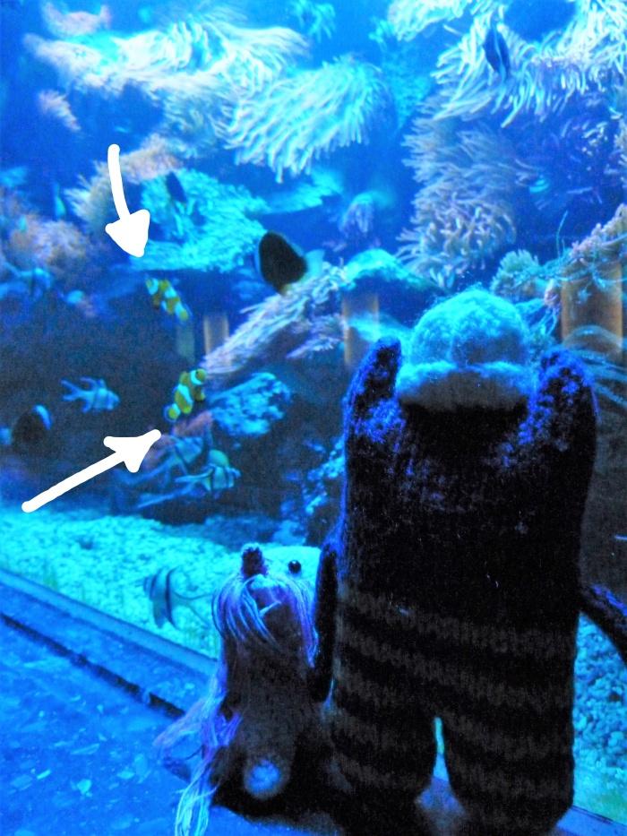 Finding Nemo - Frankfurt Zoo - CrawCrafts Beasties