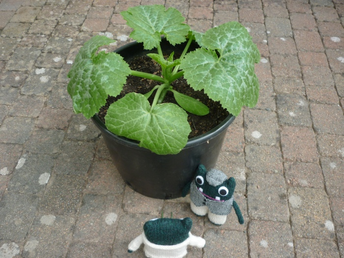 Courgette Plant's New Home - H Crawford/CrawCrafts Beasties