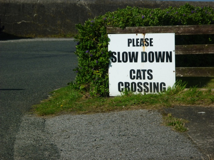 Cat Crossing at the Lighthouse - CrawCrafts Beasties