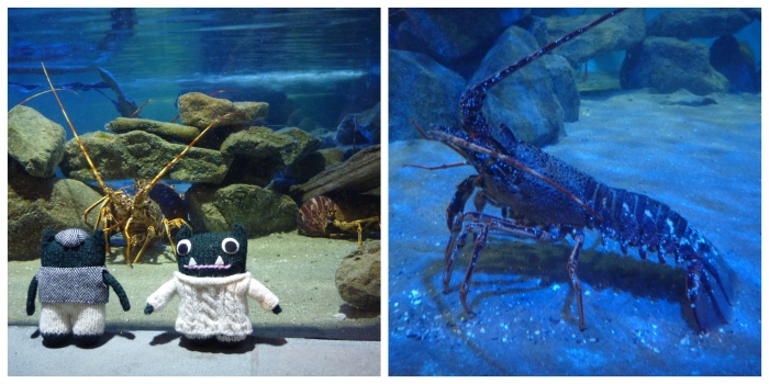 Beasties at the Lobster Hatchery - Sea Zoo Anglesey - H Crawford/CrawCrafts Beasties