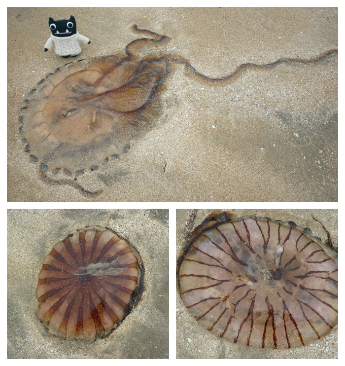 Paddy and the Jellyfish - H Crawford/CrawCrafts Beasties
