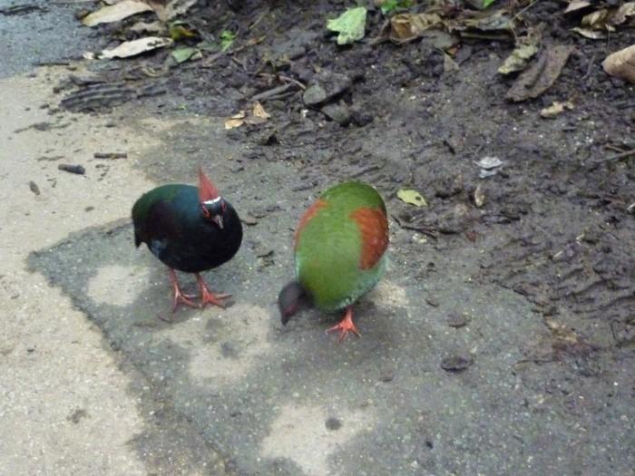 Plunkett's Feathered Friends - H Crawford/CrawCrafts Beasties