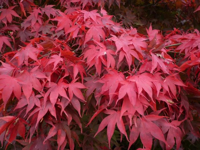 Red October Leaves - H Crawford/CrawCrafts Beasties
