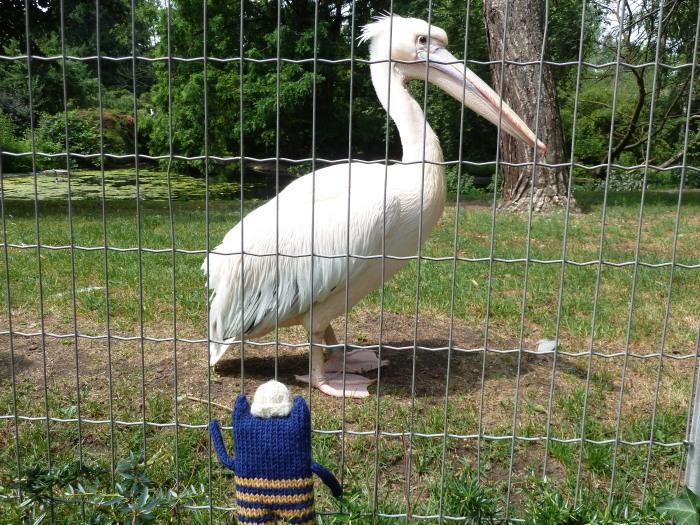 A Pinkish Pelican - CrawCrafts Beasties