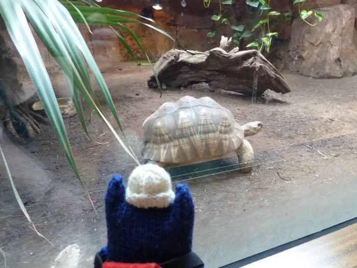 Tortoises at Aquazoo - CrawCrafts Beasties
